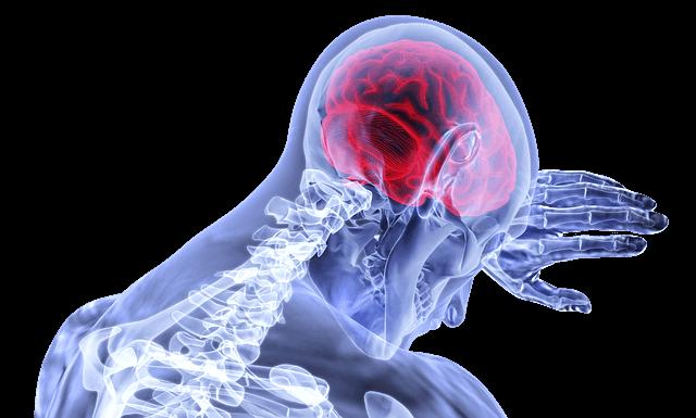 Grafika przedstawia szkielet człowieka z wyraźnie zaznaczonym mózgiem